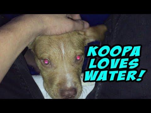 KOOPA LOVES WATER!