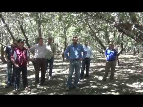 Accurately Measuring Soil Moisture Levels in an Almond Orchard