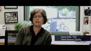 UC Berkeley Vision Science: Neuroscience and Neurobiology