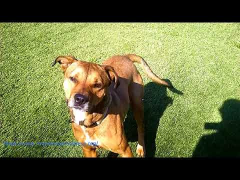 Friendly Fritz - Up for Adoption - MARQ