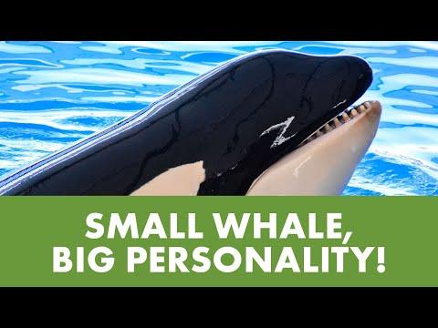 Meet Kamea   SeaWorld®
