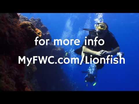 Kill 50 Lion Fish, Get Rewarded:  fishing news #3