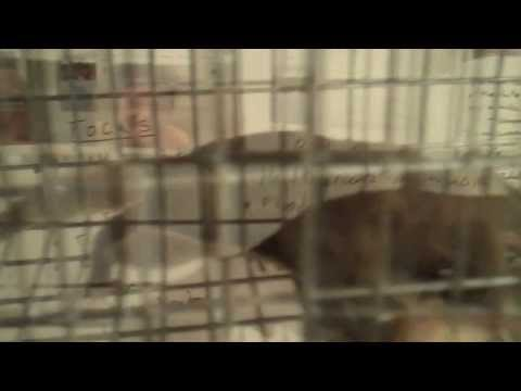 John Adolfi Presents: How to Trap a Flying Squirrel in a Small Cage in 12 Minutes.