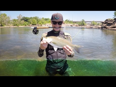 Fly Fishing for Bass for the First Time! - Vlog (Bass Fishing) Powered by Whitewater Express