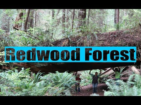 Redwood National Forest 2nd stop on our Road Trip // California