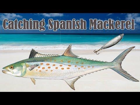 Bridge Fishing - How To Catch Spanish Mackerel