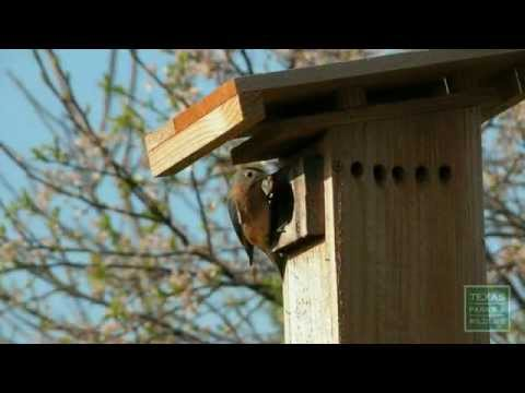 How to install a Bluebird nest box - Tips from a Wildlife Biologist