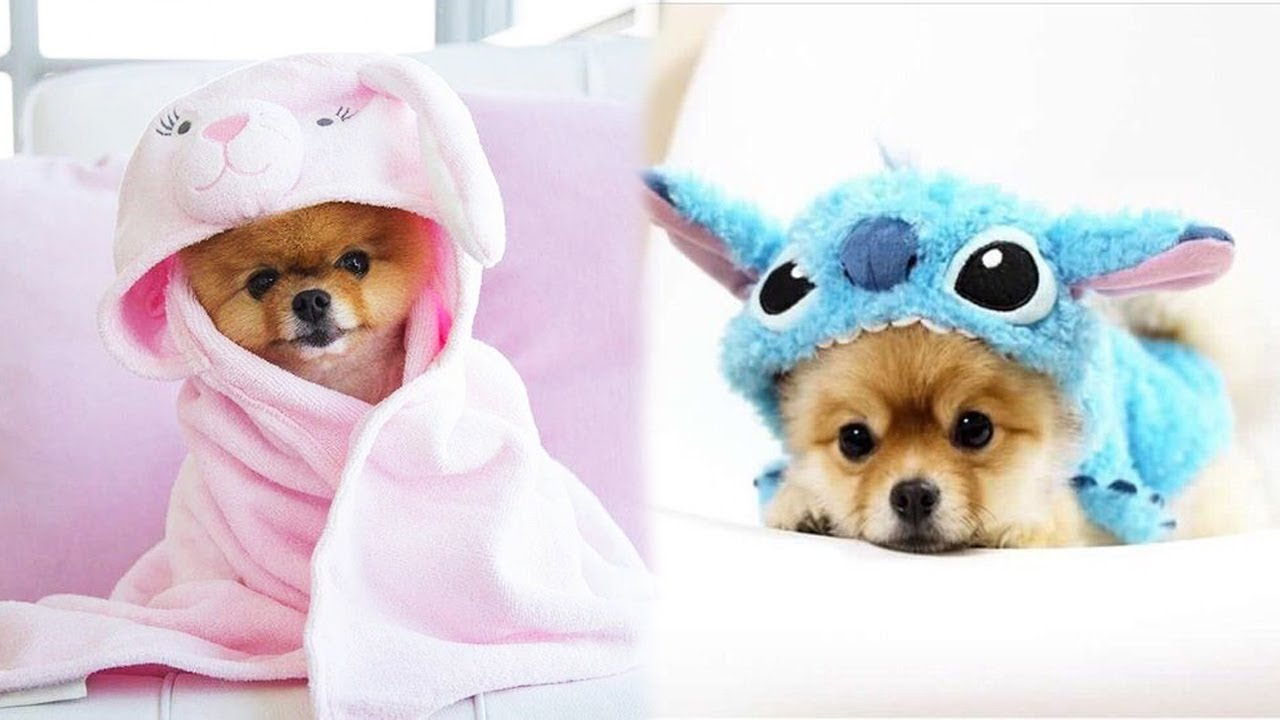 ♥Cute Puppies Doing Funny Things 2021♥ #9  Cutest Dogs