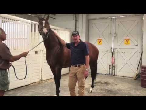 Two Minutes With Ted : Checking Your Horse's Legs