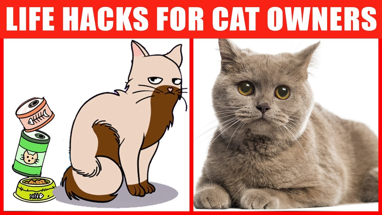 Cat Life Hacks That'll Change Your Life