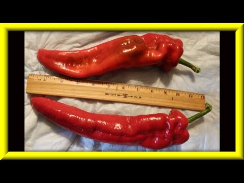 Sweet Peppers A Little Showing Off & A Mistake