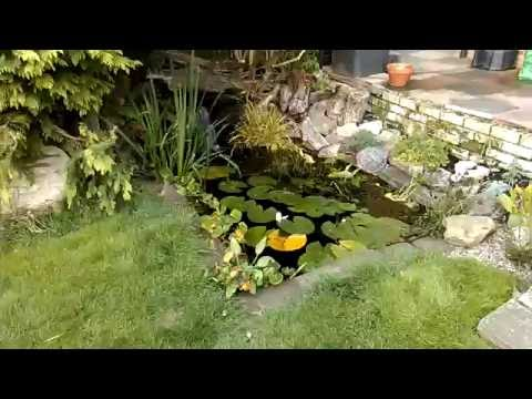 Garden fish pond with waterfall update. 3 years on from how to video.