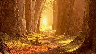 """Peaceful Music, Relaxing Music, Instrumental Music, """"Portugal"""" by Tim Janis"""