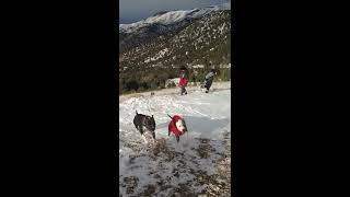 Dogs and Kids in the Snowy Mountains!