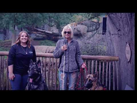 Three New Service Dogs at the Portland Zoo! Off Leash K9 | Service Dog Training