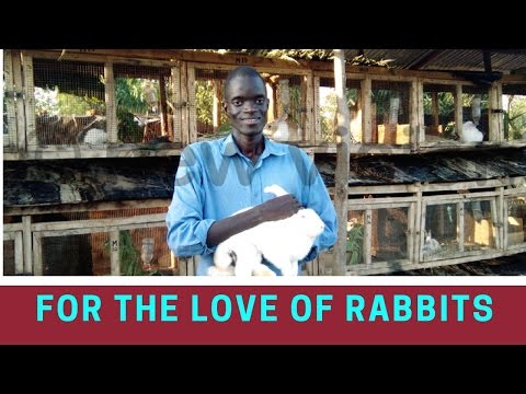 For the love of rabbits