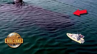 90 FT MEGALODON CAUGHT ON TAPE - real or fake?