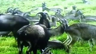 pahari video kksalambolgspot. com