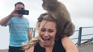 Funny Animals Attacking People 😂🔥 Try Not To Laugh | Hilarious Fail Videos 2020