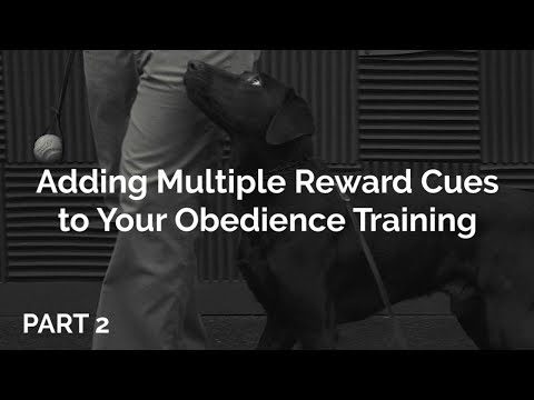 Utilizing Multiple Reward Markers with Ryan Maciej - Part 2