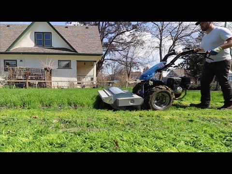 Building Soil With Cover Crops!