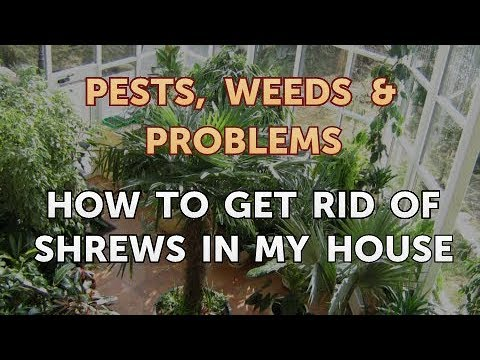 How to Get Rid of Shrews in My House