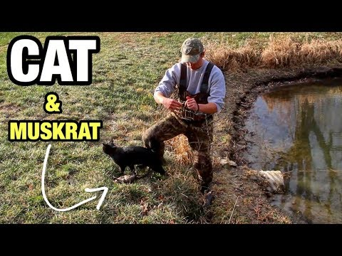 Trapping WINTER Muskrats with STRAY CAT and CONIBEARS?!?
