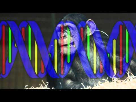 Monkeying With Genetics