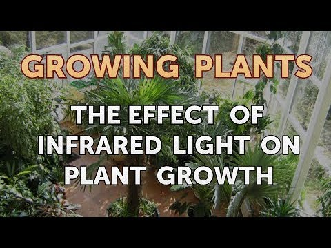 The Effect of Infrared Light on Plant Growth