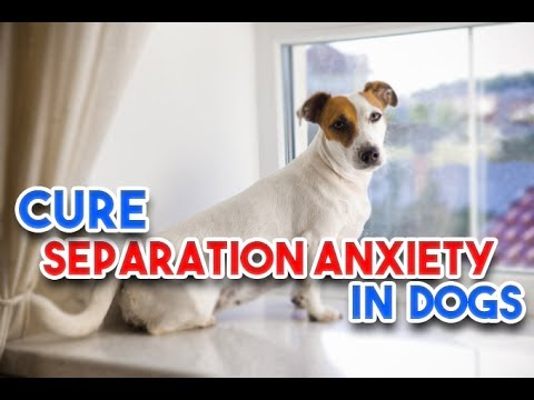 Separation Anxiety in Dog: How to Treat Separation Anxiety in Dog.