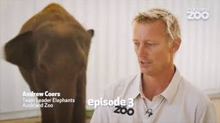 Zoo Tales - Elephant Anjalee's journey to Auckland Zoo