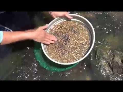 How to Sieve for Gemstones - Sapphires and Zircon   Liz Kreate