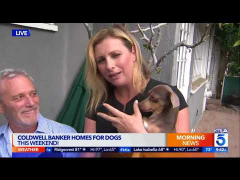 Coldwell Banker, Shelters Join to Help Shelter Animals Find Homes this Weekend Sept 9-10