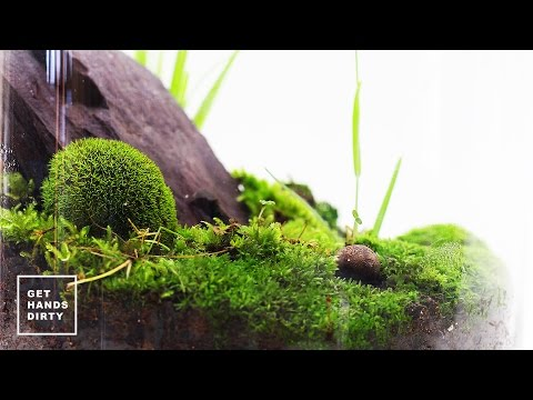 Making a Terrarium // ASMR