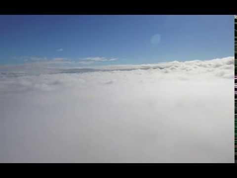 wello fog