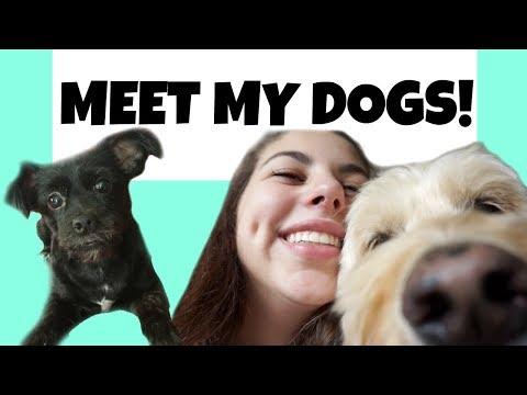 Meet My Dogs!