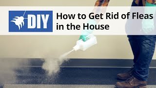 How To Get Rid Of Fleas In The House Indoor Flea Control Treatment
