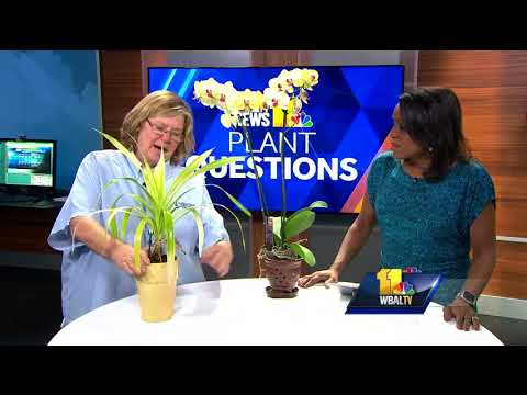 Plant questions: How to get a pineapple plant to bloom