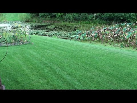 Compadre Zenith Zoysia Gr Seed Plus Sod 2017 Part 5