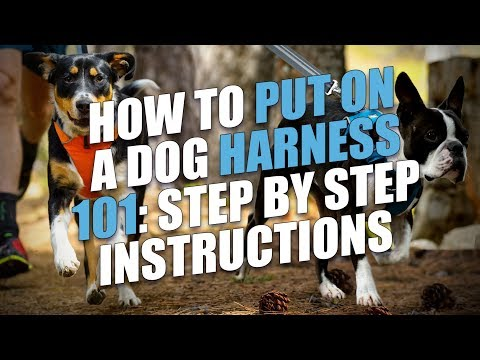 How to Put On a Dog Harness (Step-by-Step Instructions)