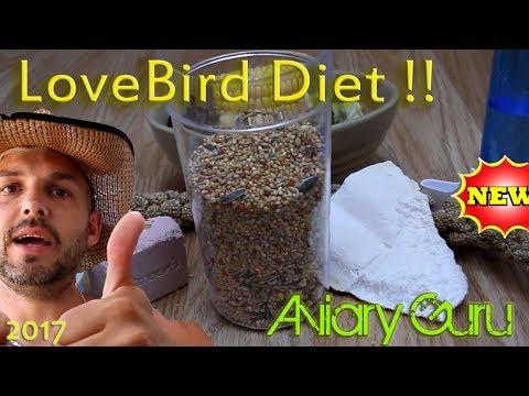 How to feed your pet LOVE BIRDS !! Best Lovebird Diet !! 2017