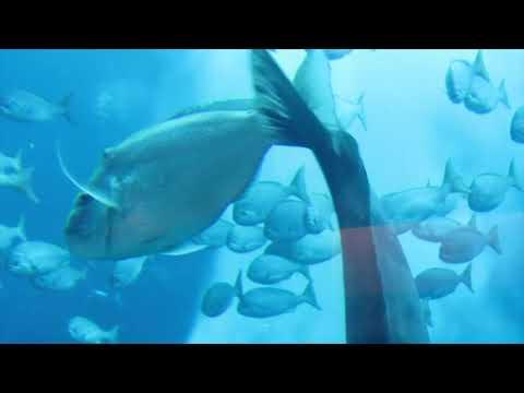 Dubai Atlantis aquarium 2018