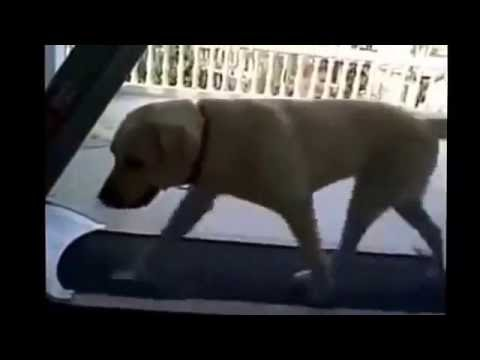 Learn how to stop dog barking at night - New Dog Training