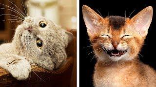 Download 世界で最も危険な10の猫種 Video
