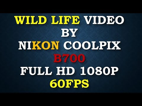 Nikon Coolpix B700 Full HD 60fps Video Test with Zoom Test