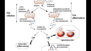 Biología - Sistema del Complemento