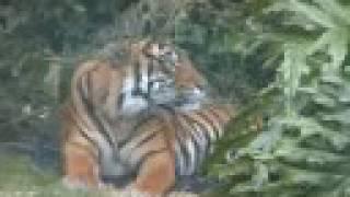 Auckland Zoo Tiki Tour