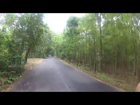 Sylhet Tour - Agar Oud / Agar Tree