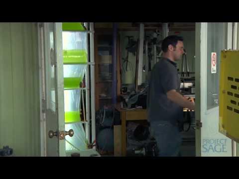 Project Sage: Using Algae to Create Biofuels
