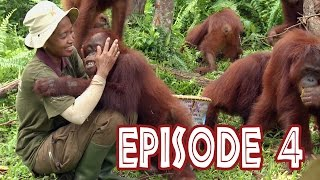 "We Love Orangutans - ""Babysitter Coordinator, Sri Rahayu"""